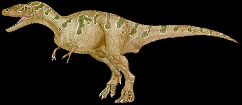 CARCHARODONTOSAURUS FOSSILS